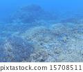 分叉珊瑚 珊瑚礁 西表岛 15708511