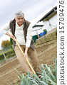 cultivating, man, kitchen garden 15709476