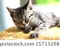 Sleepy kitten 15713208