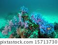 Coral underwater in Similan Islands, Thailand 15713730