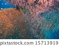 soft coral at Similan island, Thailand 15713919