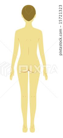裸体 美容 解剖学 15721323