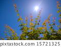 秋叶在初夏 15721325