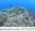 分叉珊瑚 珊瑚礁 西表岛 15721629