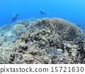 分叉珊瑚 珊瑚礁 西表岛 15721630