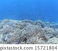 分叉珊瑚 珊瑚礁 西表岛 15721804