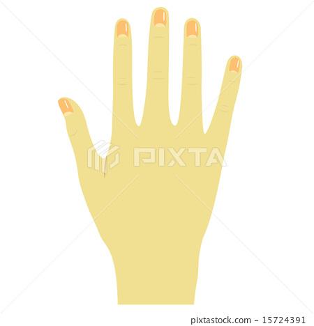 右手背 15724391