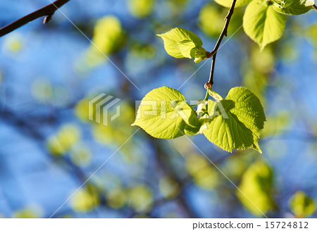 Green leaves background 15724812