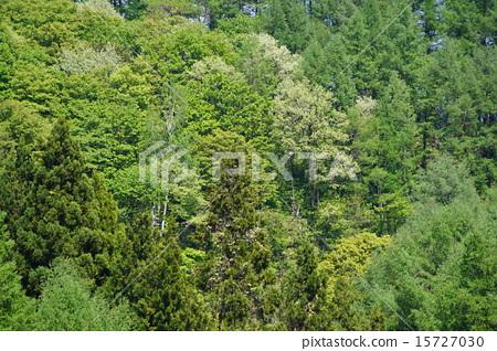 신록의 숲 15727030