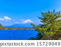 富士山和松蔭湖的樹木 15729049