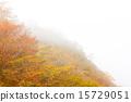 在霧的秋葉 15729051