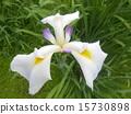화이트, 흰, 하양 15730898