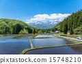 青荷村 水稻 北阿尔卑斯 15748210
