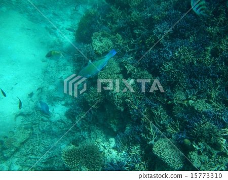Tropical sea and fish 15773310