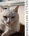 Cat 15774205