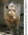黑犀牛 天竺寺動物園 動物 15796621