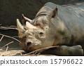 睡著 黑犀牛 天竺寺動物園 15796622