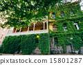 ivy, wall, window 15801287