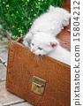 สัตว์,สัตว์ต่างๆ,ลูกแมว 15804212
