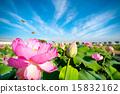Landscape Vol.2_085 15832162