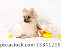 Pet Dogs pho141_068 15841215