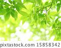 新鮮的綠色 15858342
