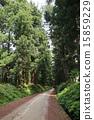 翠綠 鮮綠 樹 15859229