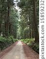 翠綠 鮮綠 樹 15859232