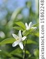花 花卉 花朵 15862248