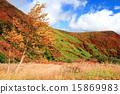 Autumn leaves of Nasu 15869983