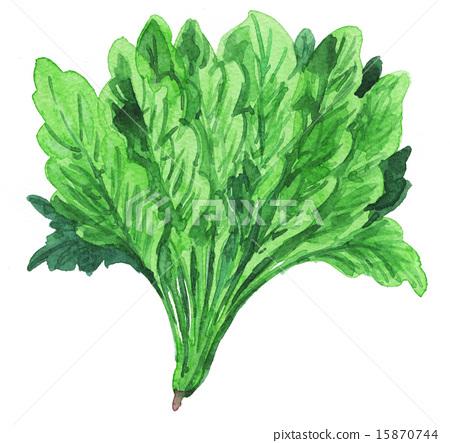 Spinach 15530 pix 1 15870744