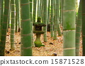 石柱 竹丛 竹子 15871528