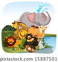Animals 15887501