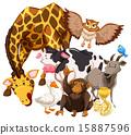猴子 长颈鹿 蛇 15887596
