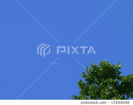 藍天,飛行保護和銀杏樹 15898686