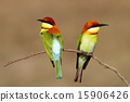 Chestnut-headed Bee-eater Merops leschenaulti 15906426