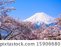 Mountain Fuji on Sunny Spring Day 15906680