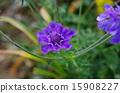 산토끼 꽃 15908227