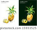 Fruits & Vegetables (035) 15933525