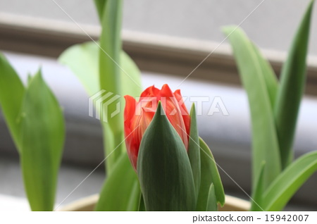花朵 花卉 花 15942007