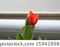 花朵 花卉 花 15942008