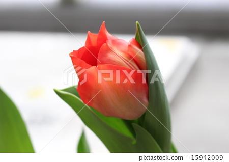花朵 花卉 花 15942009