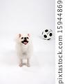 Pet_015 15944869
