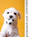 Pet_216 15944960