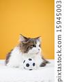 Pet_259 15945003