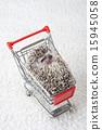 Pet_283 15945058