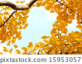 Autumn Leaves_028 15953057