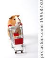 Pet_191 15958230