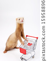 Pet_175 15958896