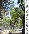 約塞米蒂 國家公園 加州 15976582
